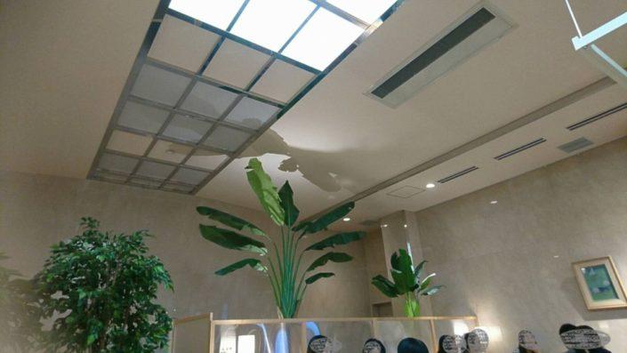 天井につきそうな大きな観葉植物